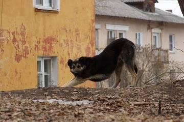 http://s6.uploads.ru/t/qnaix.jpg