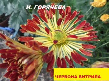 http://s6.uploads.ru/t/qz4cl.jpg