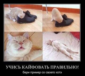 http://s6.uploads.ru/t/va9bc.jpg