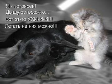 http://s6.uploads.ru/t/wdfWQ.jpg
