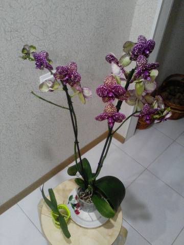 http://s6.uploads.ru/t/yIWgG.jpg