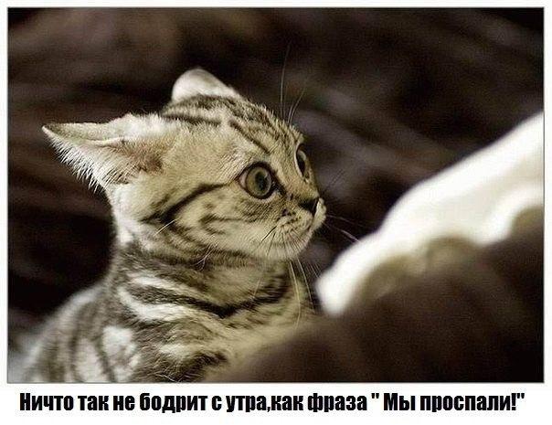 http://s6.uploads.ru/tesgJ.jpg