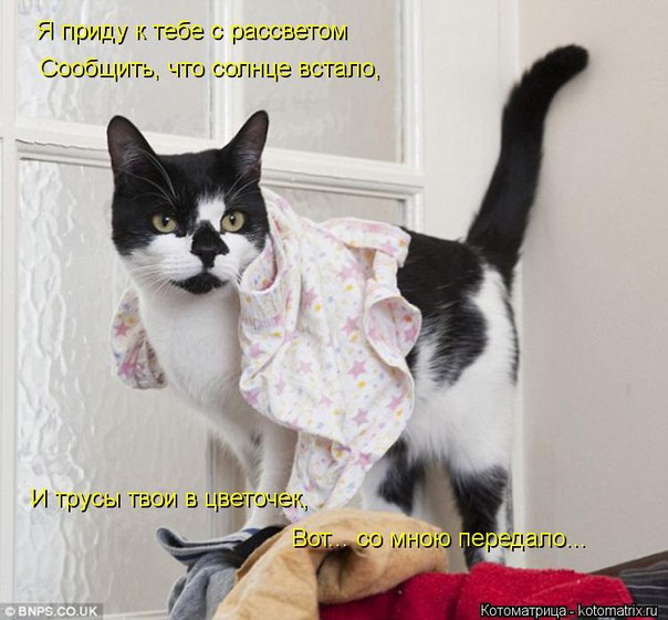 http://s6.uploads.ru/xIkrW.jpg