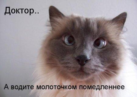 http://s6.uploads.ru/ygQ4x.jpg