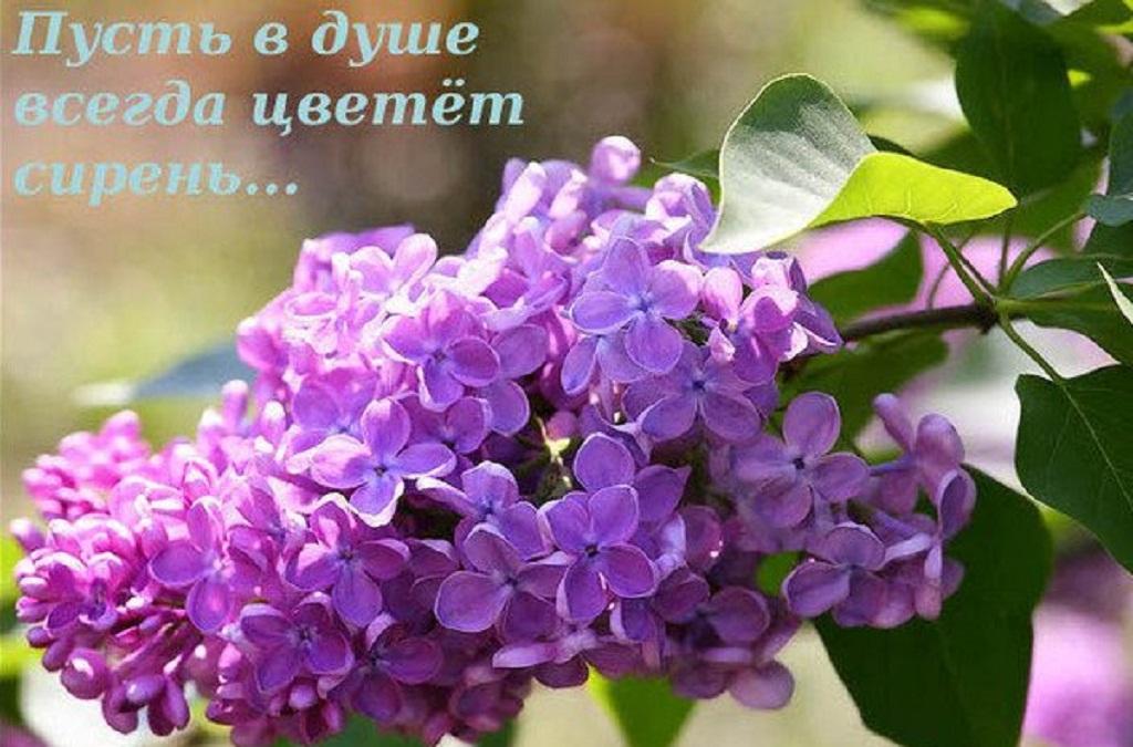 http://s6.uploads.ru/ywDQl.jpg