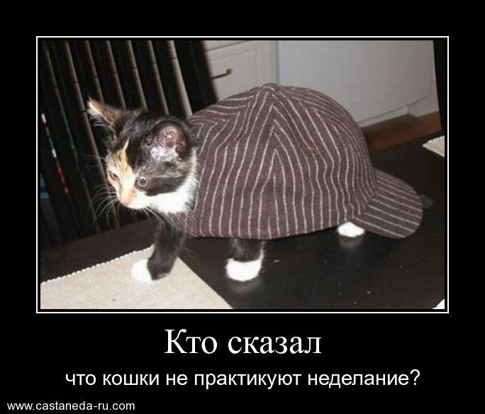http://s6.uploads.ru/372nd.jpg
