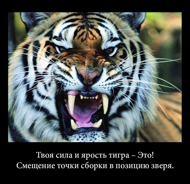 http://s6.uploads.ru/5rW3d.jpg