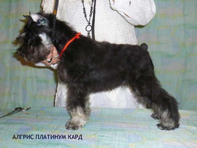 http://s6.uploads.ru/GVKJ5.jpg