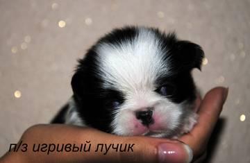 http://s6.uploads.ru/t/5u4j7.jpg