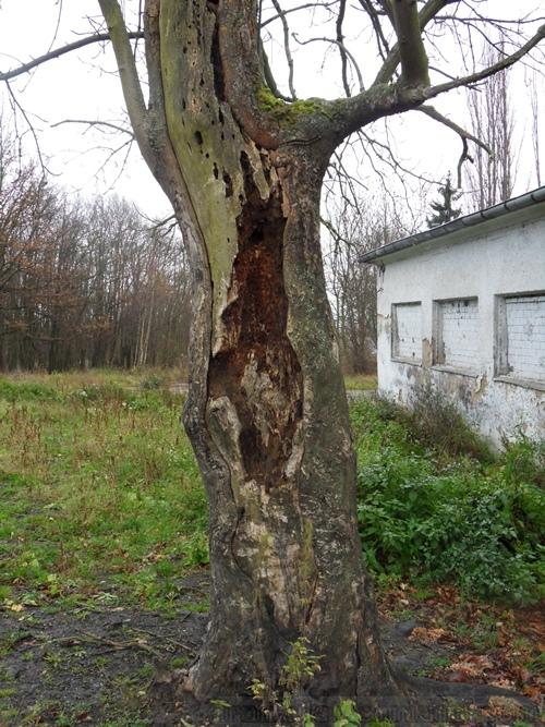 http://s6.uploads.ru/t/goUrw.jpg