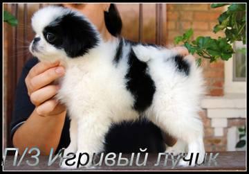 http://s6.uploads.ru/t/vhKnA.jpg